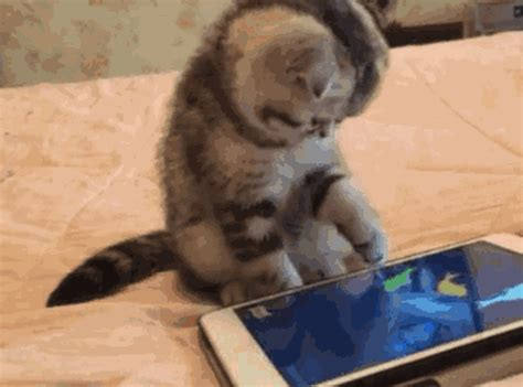 iphone animated gif cat gif find on giphy