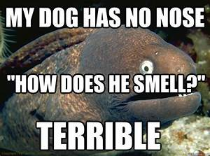 """My dog has no nose """"how does he smell?"""" terrible - Bad ..."""