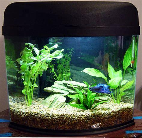 small fish for aquarium small fish tanks tropical small tropical aquarium fish small aquarium tropical fish forums at