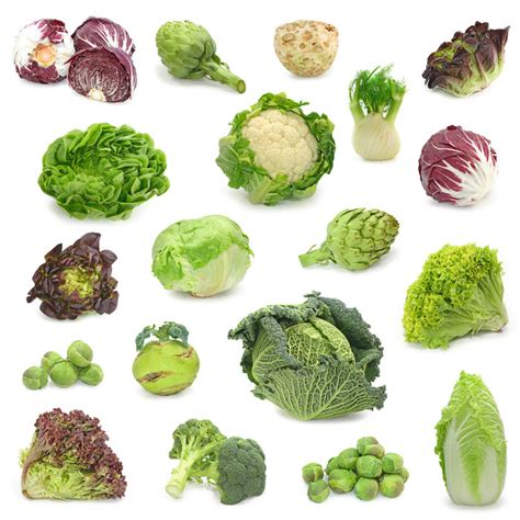 Vegetables Artificial Selection Examples