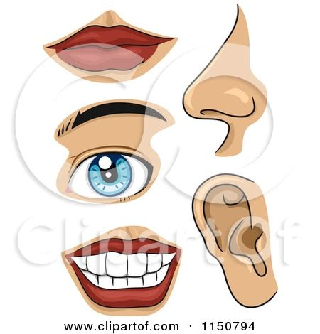 face parts body clipart   cliparts  images