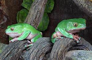 Licking Frogs To Get High