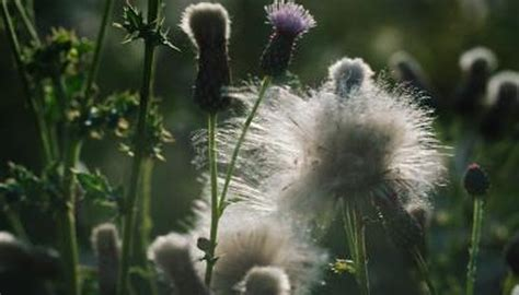 The Identification Of Weeds In Indiana Garden Guides