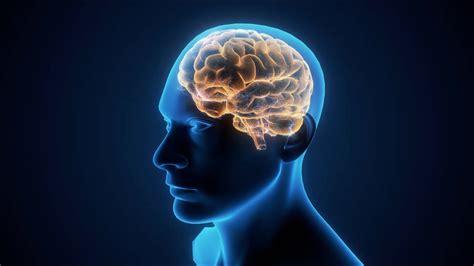 untangling  brain circuits  mental illness youtube