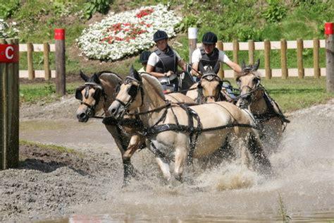 fahren pferdefreunde offenthal reit und fahrverein ev