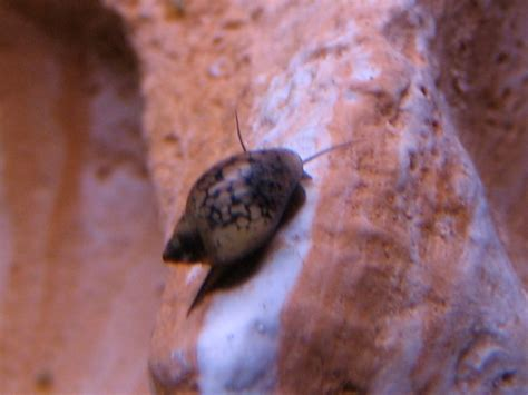 escargot dans un aquarium 28 images le pi 232 ge 224 escargot quot sera quot page 2 les