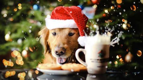 » Ziemassvētku Labdarības akcija!