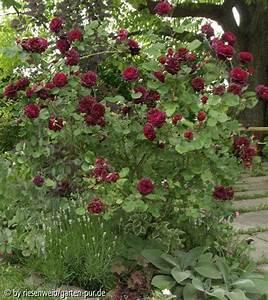 Garten Pur Forum : 8 ~ Lizthompson.info Haus und Dekorationen
