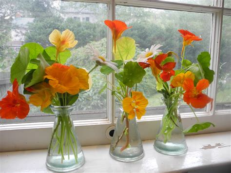 Flowers For Windowsill by Collection Of Nasturtiums And Nippon Daisies In The