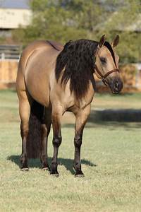 Quarter Horse mare Belle Starr Dun It she is ready for ...