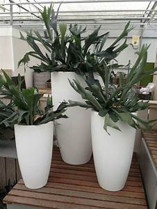 Zimmerpflanze Für Badezimmer : 41 besten interior zimmerpflanzen bilder auf pinterest zimmerpflanzen pflanzent pfe und ~ Sanjose-hotels-ca.com Haus und Dekorationen