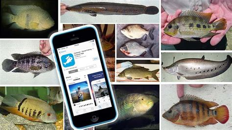 fish freshwater fwc app fishbrain nonnative florida species track help magazine angler wildlife coastalanglermag