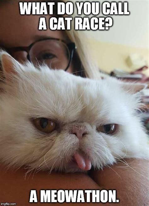 Unamused Meme - image tagged in unamused cat imgflip