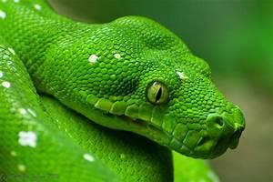 Die Grüne Regenrinne : die gr ne foto bild tiere zoo wildpark falknerei amphibien reptilien bilder auf ~ Eleganceandgraceweddings.com Haus und Dekorationen