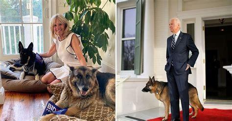White House Preps For Joe Biden's Rescue Dog 'Major ...