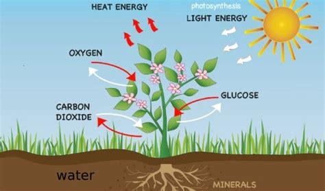 process  photosynthesis  green plants quiz