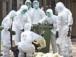 Scientists Talk Of  U0026 39 Pandemic Potential U0026 39  After First