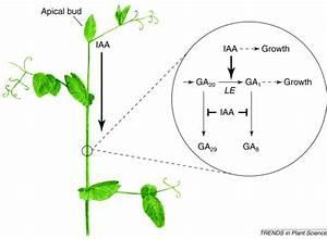 New interactions between classical plant hormones: Trends ...