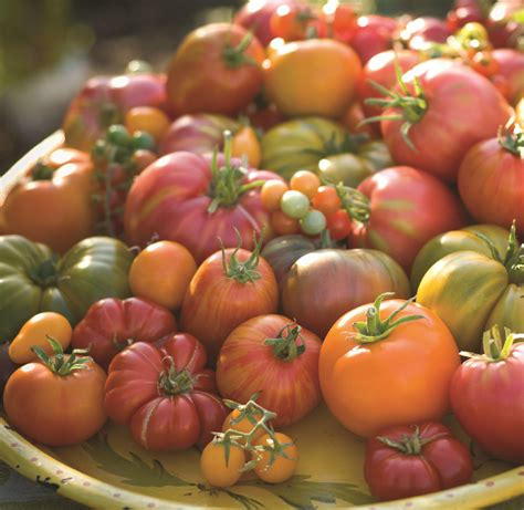heirloom tomatoes triple cord tomato challenge lady locavore