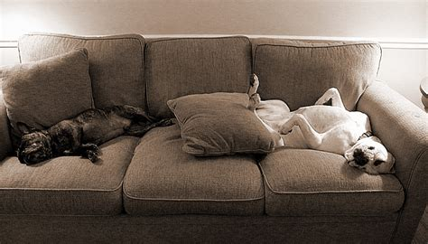 best sofa for dogs 10 signs you 39 re a crazy dog person the odyssey