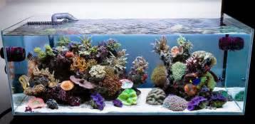aquarium designer aqua design amano 120 p overflow model open top reef aquarium reef