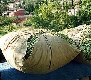 Toile Pour Jardin : bourras nappe de jute pour le jardin et le potager ~ Teatrodelosmanantiales.com Idées de Décoration