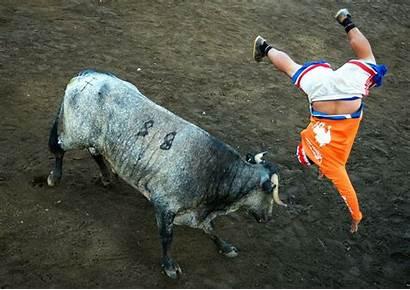Costa Bullfighters Rica Bull Rican Essay Bullfighting