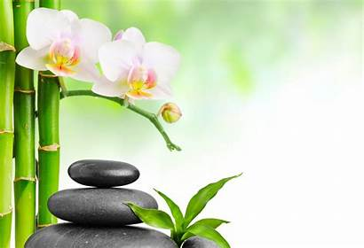 Orchid Bamboo Spa Stones Flowers Flower Wallpapers
