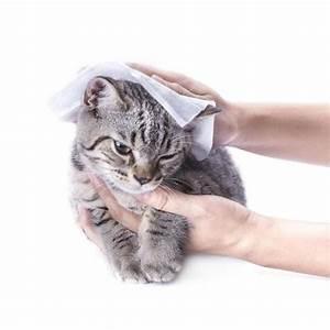 Laver Un Chaton : comment s 39 occuper d 39 un chaton non sevr ~ Nature-et-papiers.com Idées de Décoration