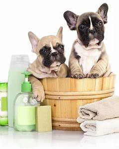 Home wetnosesgroomingcom for In the dog house grooming