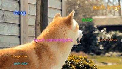 Doge Memes Meme Imgur Wow Bonus Such