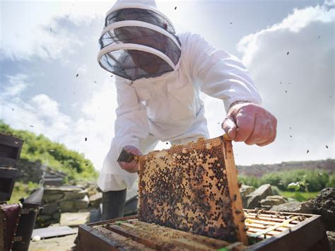 step  step guide  inspecting  honey bee hive