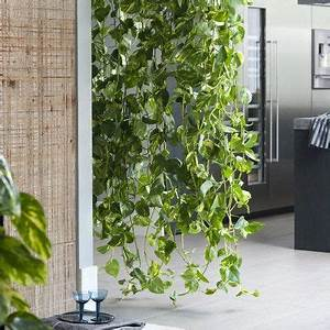 Plante Intérieur Grimpante : le scindapsus la plante grimpante des astronautes salon pinterest plante grimpante ~ Louise-bijoux.com Idées de Décoration