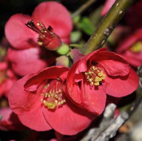 Lalyk ... franturi de viata: Flori pentru o