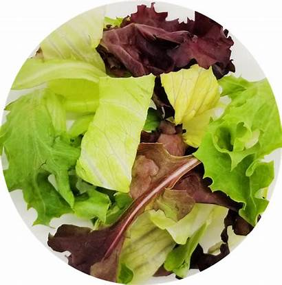 Menu Poke Poke Lettuce Salad