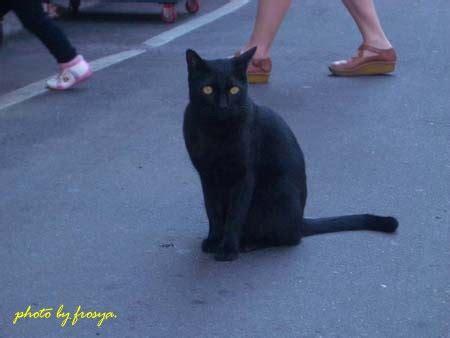 黑貓(くろねこ) • (kuroneko) (kyūjitai, shinjitai 黒猫). 小詩寶貝: 黑貓 fietype:jpg
