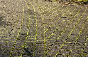Traitement Anti Mousse : le prix d 39 un traitement antimousse pour toiture fa ade ~ Farleysfitness.com Idées de Décoration