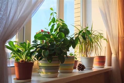 House Plants Beaverton Oregon