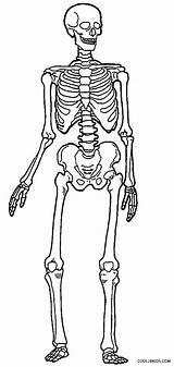 Skeleton Coloring Human Pages Skeletons Anatomy Printable Bones Drawing Sheets Simple Cool2bkids Skeletal System Body Sketch Getdrawings Skull Halloween Ribs sketch template