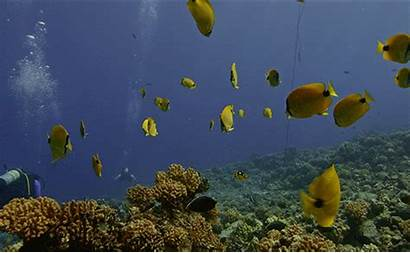 Coral Ocean Reefs Marine Office Without Sanctuaries