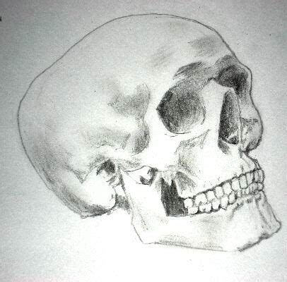 Photos Pencil Drawing Skull Images Drawings Art Gallery