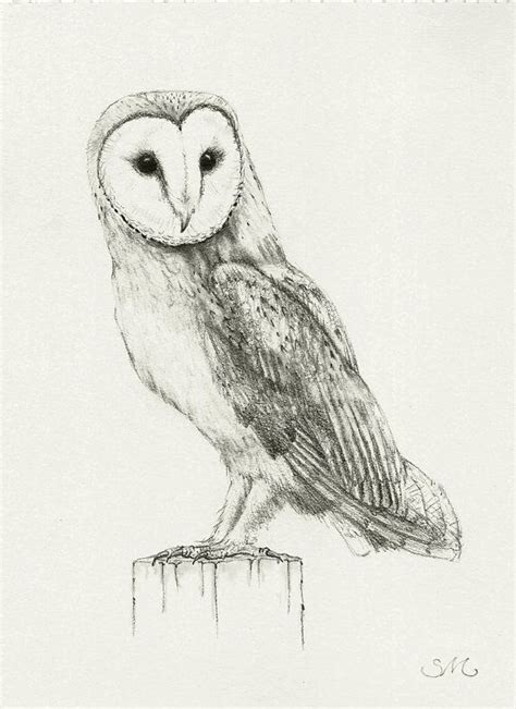 flying barn owl drawing barn owl sketch pictures to pin on pinsdaddy