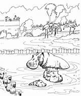 Coloring Hippo Animals Hippos Wildlife Printable Zoo Wallowing sketch template