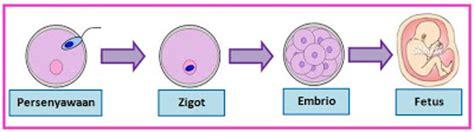 Janin Bergerak Sains Pembiakan Organ Pembiakan