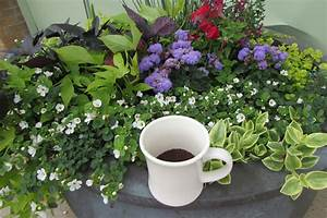 coffee grounds and your garden capital landscaping
