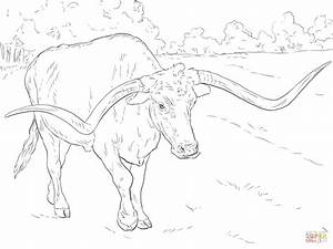 Realistic Texas Longhorn Coloring Page Free Printable