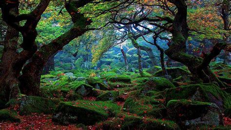 autumn mossy forest hd wallpaper wallpaper studio