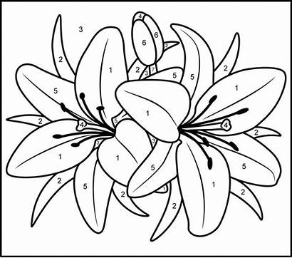 Paint Printable Number Coloring Pages Numbers Adult