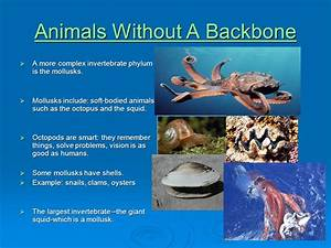 What are Vertebrates and Invertebrates? - ppt video online ...