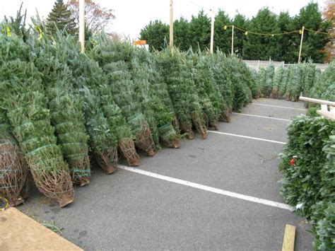 trees prepped for sale in arlington arlnow - For Sale Christmas Tree